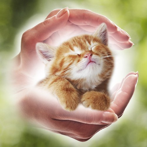 Reiki For Cats (Online Course)