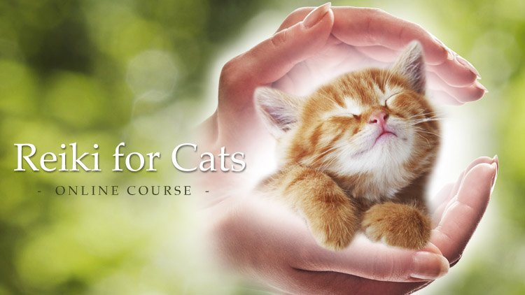 Reiki for Cats - Online Course